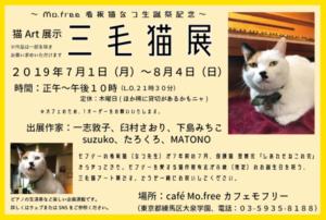 三毛猫展2019